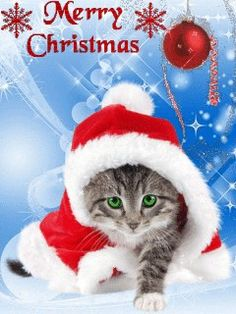 Pin on Christmas gif Merry Christmas Cat, Christmas Wishes, Christmas Greetings, Xmas, Christmas Scenes, Christmas Animals, Christmas Images, Animated Christmas Pictures, Christmas Quotes