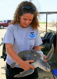 Lyndsey Howell, a Fisheries Biologist with NOAA rescues another Kemp's Ridley.