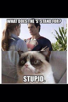 """""""Super"""" Grumpy Cat :)"""