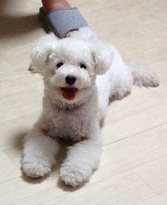 Peko-chan : happy
