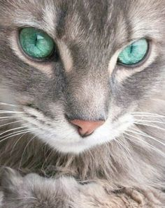 i would bet money that this person stole a pic of my cat and changed the eye color weird!