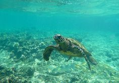 Come on holidays in the diver's paradise: get PADI certificate in Thailand and go on a boat trip to snorkel or scuba-dive with myriads of fish and corals. Breathing Underwater, Underwater World, Seychelles Islands, Snorkeling, Scuba Diving, Southeast Asia, Paradise, Adventure, Turtles