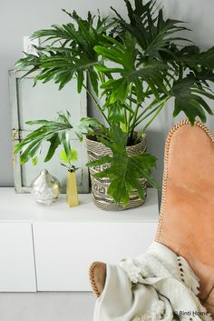 Create a balanced Urban jungle at home with plants Interior Design Plants, Interior Styling, Herb Labels, Plants Are Friends, 3 Friends, Green Environment, Butterfly Chair, Outdoor Plants, Green Plants