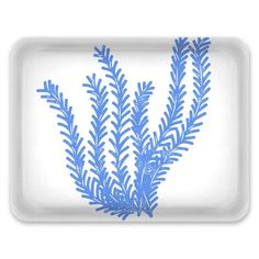 Tray - Large - Seagrass - Cornflour Blue on White