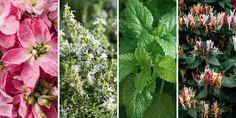 🌸🌿🌺 Επιλέγουμε αρωματικά φυτά και λουλούδια του κήπου που είναι πλούσια σε αιθέρια έλαια για να φτιάξουμε φυσικά καλλυντικά, σαπούνια και αρώματα στο σπίτι με τον πιο εύκολο και οικονομικό τρόπο.