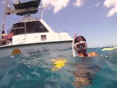 Snorkeling with Turtles - Honolulu Tours Snorkeling, Turtles, Hawaiian, Marvel, Tours, Diving, Tortoises, Turtle, Tortoise