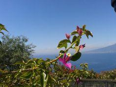 Flower Vesuvius