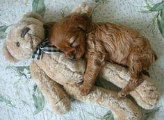 Puppie hugging teddy