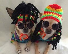 Rasta dog carnival hat with beaded dred locks - for small size dogs chihuahua…