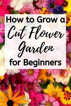 Flower Garden Plans, Cut Flower Garden, Flower Garden Design, Flower Farm, Cut Garden, Garden Ideas, Flower Beds, Garden Paths, Beautiful Bouquet Of Flowers