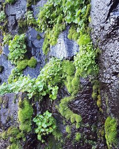 """There is an ancient conversation going on between mosses and rocks poetry to be sure."" -Robin Wall Kimmerer by livinglifeunscripted"