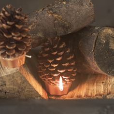 Pine Cone Fire Lighters    These fantastic cinnamon scented pinecones in waxed cupcake pots are a million style-miles away from acrid chemical firelighters - they look great even when the fire is unlit. Use them in woodstoves, campfires or fireplaces. Great housewarming gift. Bag of 12.