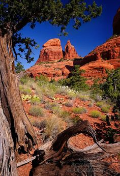"This image illustrates the rewards of getting off the beaten path sometimes - in this case, via an ""undocumented"" side trail above the Munds Wagon trail near Sedona, Arizona. Landscape Photos, Landscape Photography, Amazing Photography, Photography Tips, Wagon Trails, Flora, Sedona Arizona, Le Far West, Best Photographers"