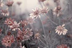 delicate with strength: hidden, deep softness