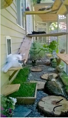 catio cat enclosure cats lounging interior haven c. catio cat enclosure cats lounging interior haven catiospaces Animal Room, Outdoor Cat Enclosure, Diy Cat Enclosure, Garden Enclosure Ideas, Dog Enclosures, Reptile Enclosure, Cat Grass, Gatos Cats, Cat Garden