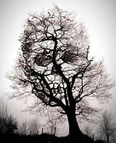 Creepy tree lily coverup