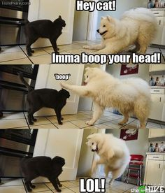 Animals are too funny. Lol