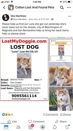 9056 Best LOST AND FOUND PETS images in 2019 | Find pets