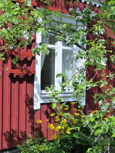 Jan 2020 - A red little cottage ~Thank you for pinning politely ~. See more ideas about Cottage, Swedish cottage and Swedish house. Swedish Farmhouse, Swedish Cottage, Swedish House, Curb Appeal, Wild Flowers, Countryside, Finland, Windows, Gardens