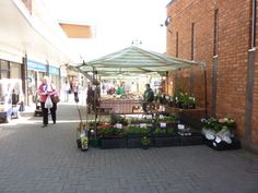 One market-goer casting her eye over some plants at Calne market
