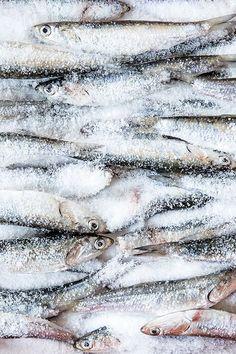 Salted Sardines | Food