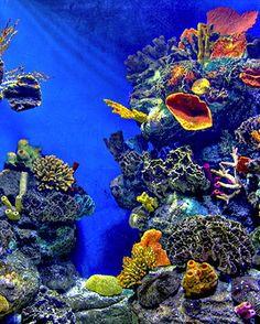 ˚Great Barrier Reef - Australia