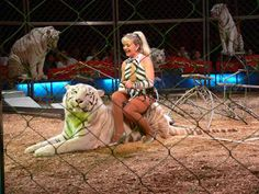 Victory! The Netherlands Becomes The Tenth European Country To Ban The Use Of Wild Animals In The Circus | Animal Equality