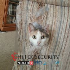HiTek Security is the House of Provision-ISR, INIM Electronics & Duevi and the sole distributor in South Africa. Home Automation, CCTV, Outdoor & Indoor Detection, Security Security Products, Nanny Cam, Built In Speakers, Alarm System, Home Automation, Indoor Outdoor, Your Pet, Africa, Audio