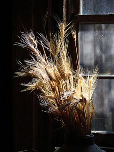 Wheat stalk...prosperity, riches, Thankful