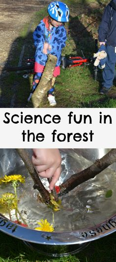 Fun science ideas for the forest or back garden.