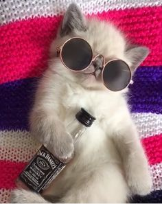 'Any plans for the weekend?' Me: '…' Star Paws Cute Cat Memes, Cute Animal Memes, Cute Animal Pictures, Cute Funny Animals, Funny Cats, Cute Baby Cats, Cute Little Animals, Cute Cats And Kittens, Cool Cats