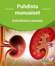 Puhdista munuaiset haitallisista aineista   Munuaiset #puhdistavat kehoa ja pitävät sen terveenä, ja silloin #tällöin on hyvä suorittaa #munuaisten puhdistus.  #Luontaishoidot