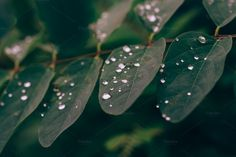 Green Leaves #03 by PhotoMarket on Creative Market