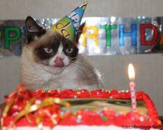 44 Ideas For Funny Happy Birthday Animals Grumpy Cat Happy Birthday Animals, Happy First Birthday, Happy 1st Birthdays, Animal Birthday, Unhappy Birthday, Meme Grumpy Cat, Funny Cat Memes, Funny Cat Videos, Funny Cats