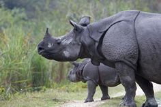 Kaziranga: For the wildlife. A fabulous option for wildlife lovers, Kaziranga is hoem to rhinos, swamp deer, elephants and several species of flora and fauna. Go on an elephant safari, visit the lush green Behora tea plantation and enjoy the Kakochang falls and the ancient ruins of Deppahar. #CoxandKings