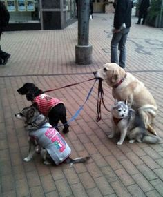 "The Doggy-Sitter:  ""These three are getting out of hand; however I must take a firm stand.  I'll just be glad to return to our home and farmland; this visit into town, was not really planned.""   (Short Poem Written By Lynn Chateau © )"