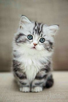Kittens are the cutest animals on earth.
