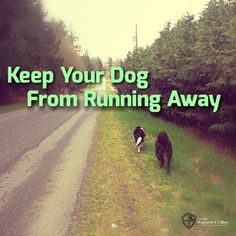 Has your dog ever run away? Guild Evangelist Kris Crestejo has some great training tips to help prevent your herding breed dog from running away in the future.