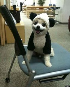 Yes, it is a puppy in a panda costume.