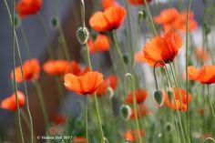 Fiore di colore rosso