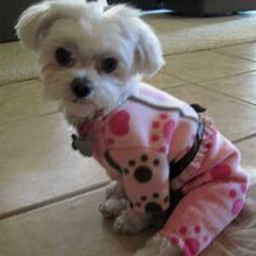 Etsy Fleece Pajamas for Small Dogs with Pink by LittleDogFashion, $47.00