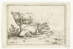 Anthonie van Borssom   Twee koeien, Anthonie van Borssom, 1639 - 1677   Twee koeien. Een koe ligt in de lengte met zijn hoofd naar rechts. De andere koe kijkt de kijker recht aan.