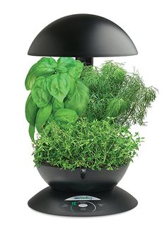AeroGarden 3-Pod Indoor Garden (with Gourmet Herb Seed Kit) 5 Christmas Gift Ideas for Boss #ChristmasGiftIdeas #AeroGarden