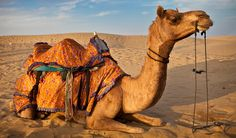 camel eyelashes - Google Search