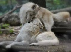 the-smiling-wolf:  Time to wish you all a beautiful day. Take care my friends.