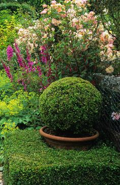 photo by John Glover -  Frith Lodge Frith Lodge, Sussex.  Boxwood topiary sphere in pot within hedge
