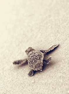 Vacation to #Cancun and release baby sea turtles into the Caribbean <3 #ecotourism (Click on photo for the story!)