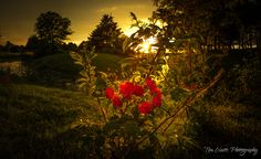 Summer Colours - Andrew Haydon Park, Ottawa ON by Tim Watts on 500px