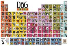 The Dog Table of the EleMUTTs features illustrations of the American Kennel Club dog breeds. Fromthe Labrador Retriever to the Xoloitzcuintli and the Yorkshire Terrier to the Dogue de Bordeaux, The Dog Tableincludes the most popular as well as … I Love Dogs, Puppy Love, All Dogs, Dogs And Puppies, Doggies, Dog Table, Purebred Dogs, Fox Terrier, Boston Terrier
