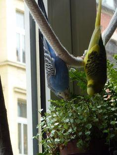Vogelspielzeug Vogelschaukel für Wellensittich Nymphensittich Spielzeug Haustierbedarf Spielzeug